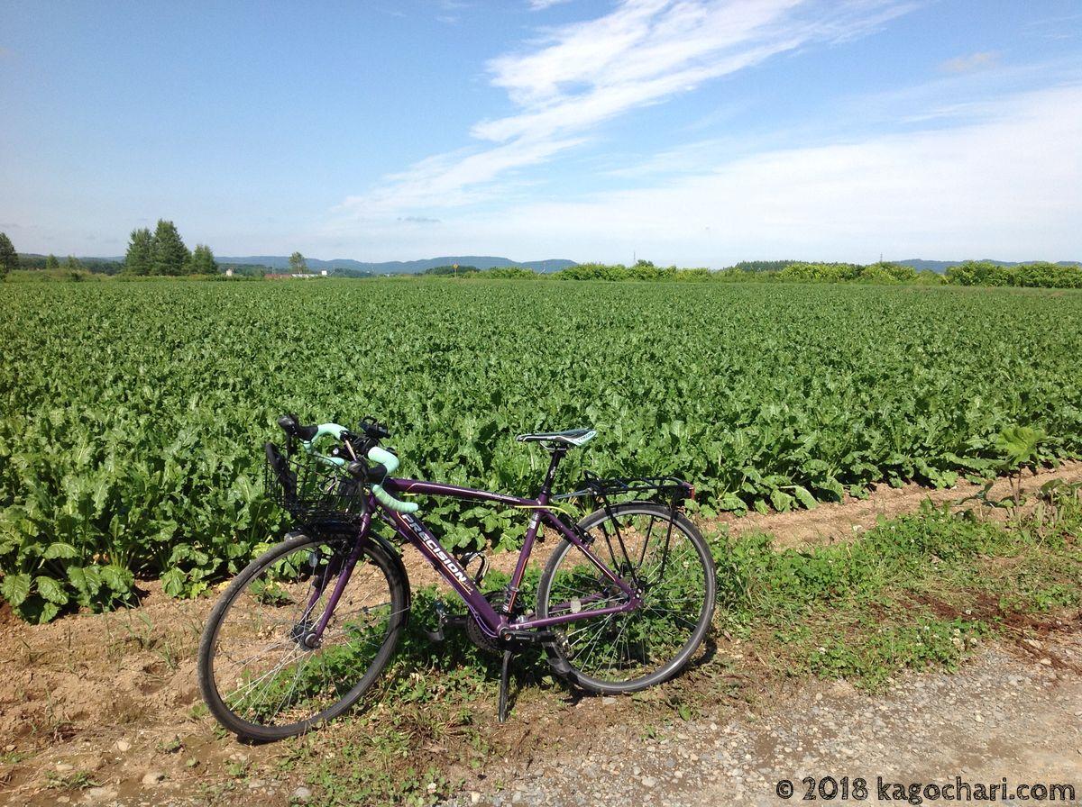 北海道ののどかな風景