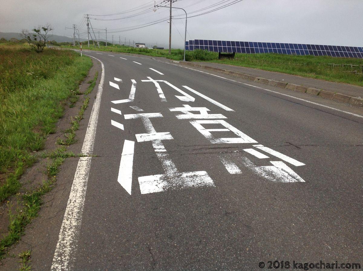 道路にシカ注意