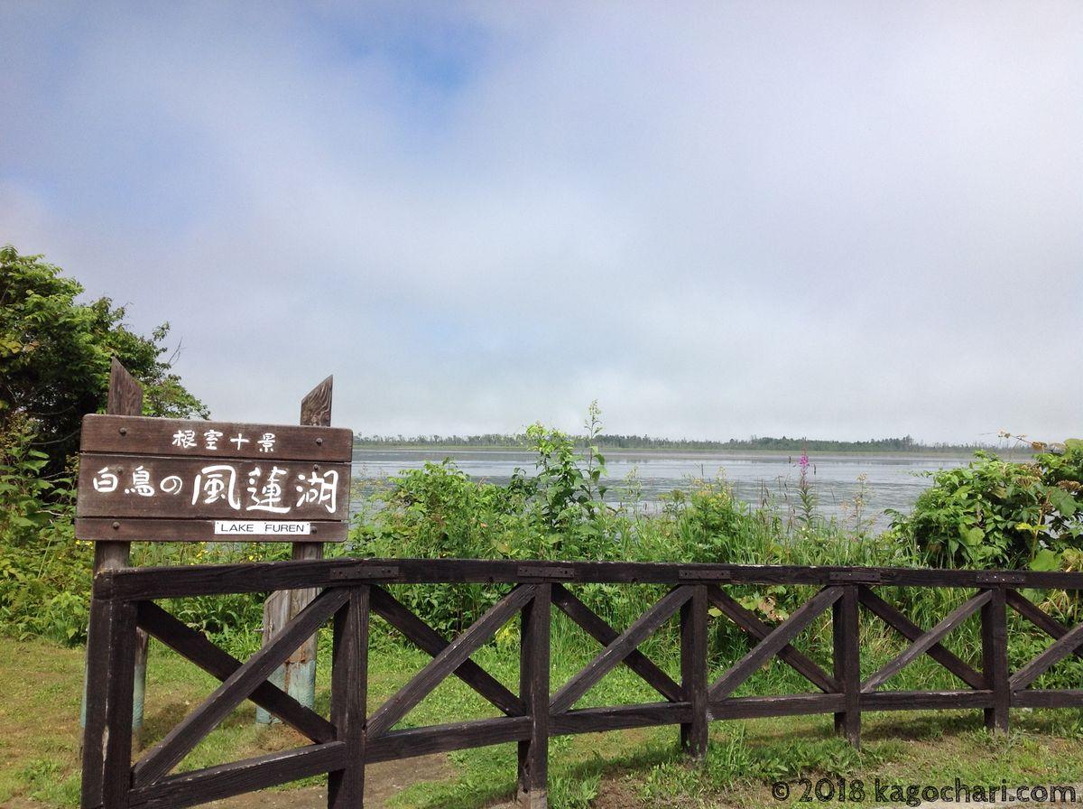 根室十景「白鳥の風蓮湖」