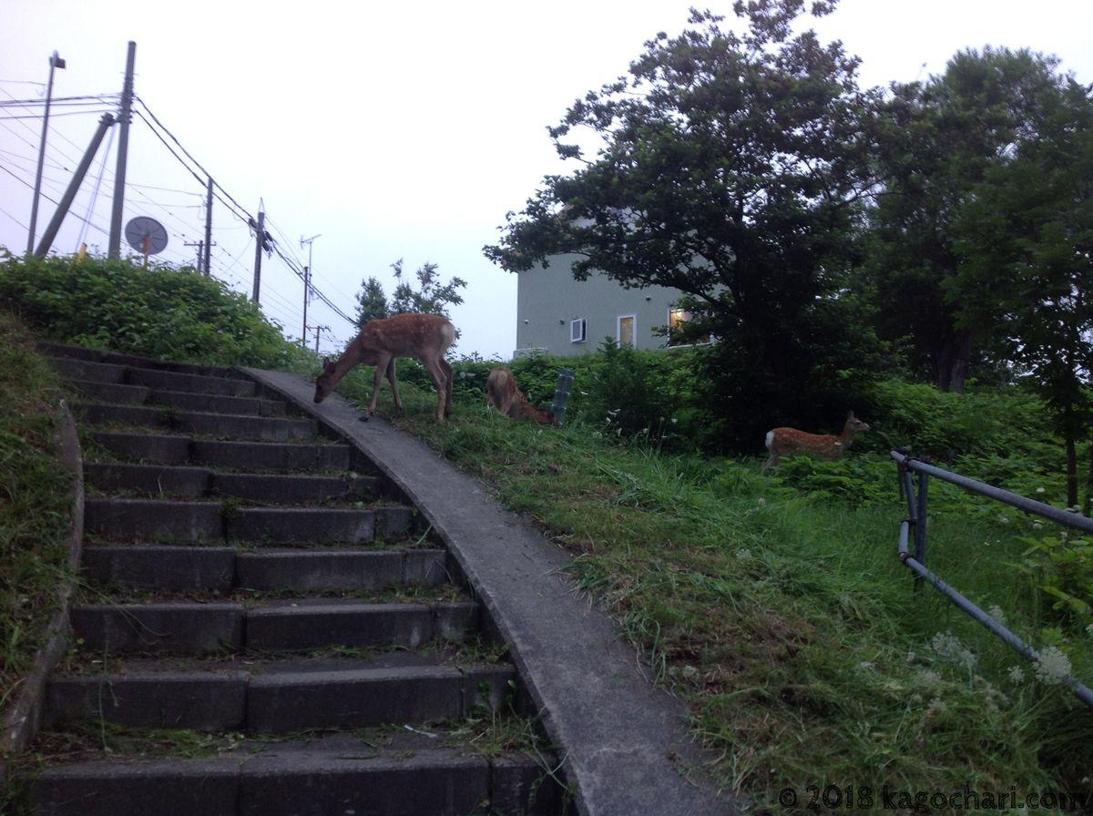 抜け道に鹿-02