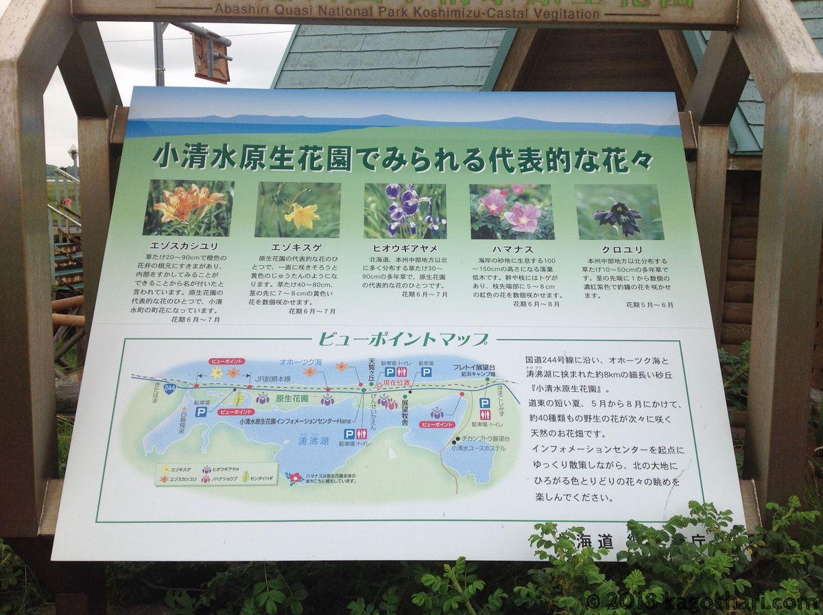 小清水原生花園でみられる花々