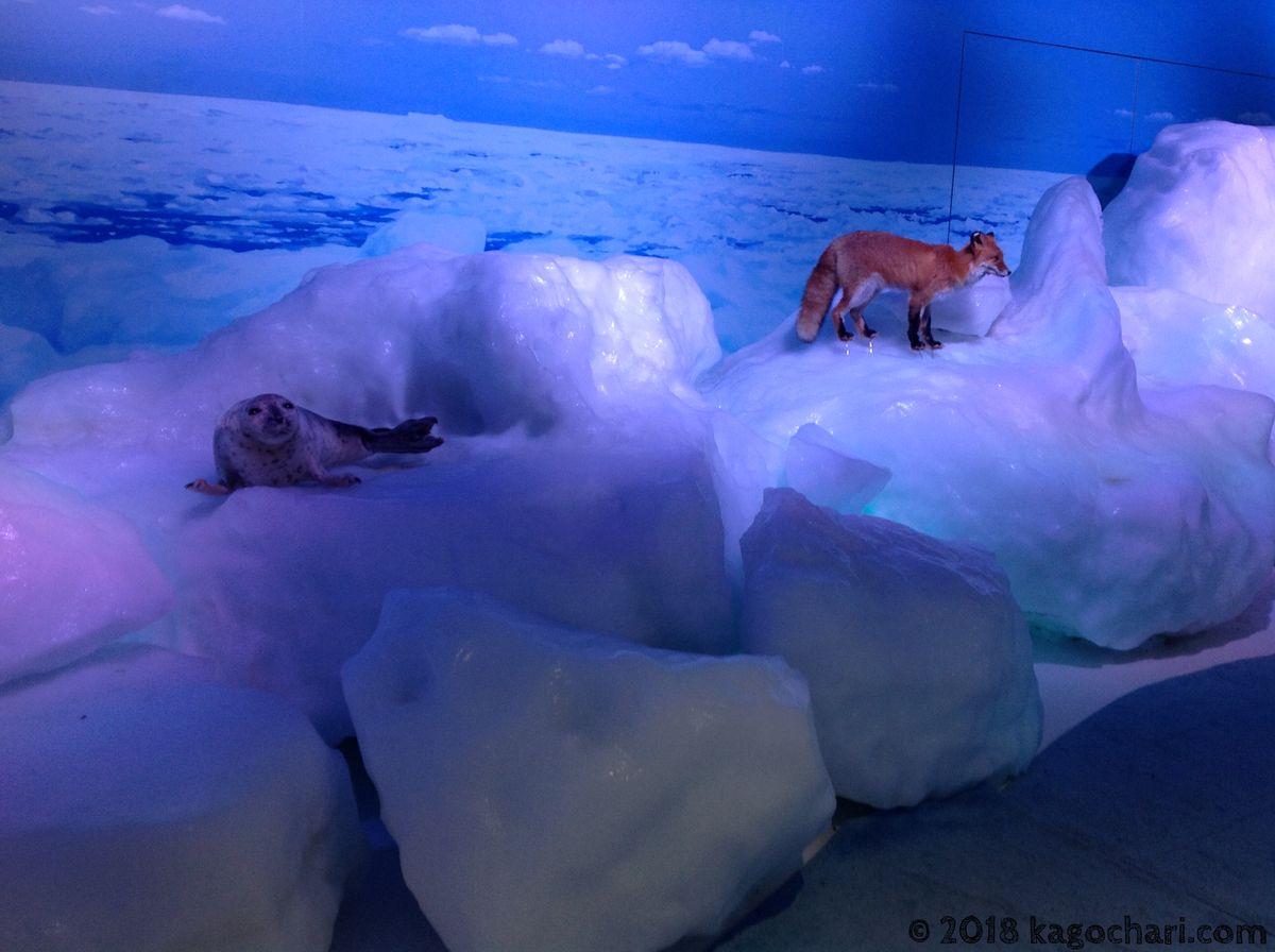 流氷体感テラス