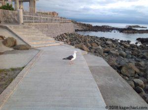 夕日を見る海鳥