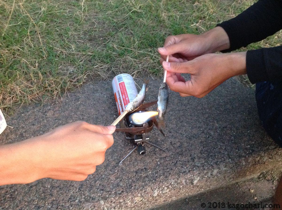 ウグイを焼いて食べる