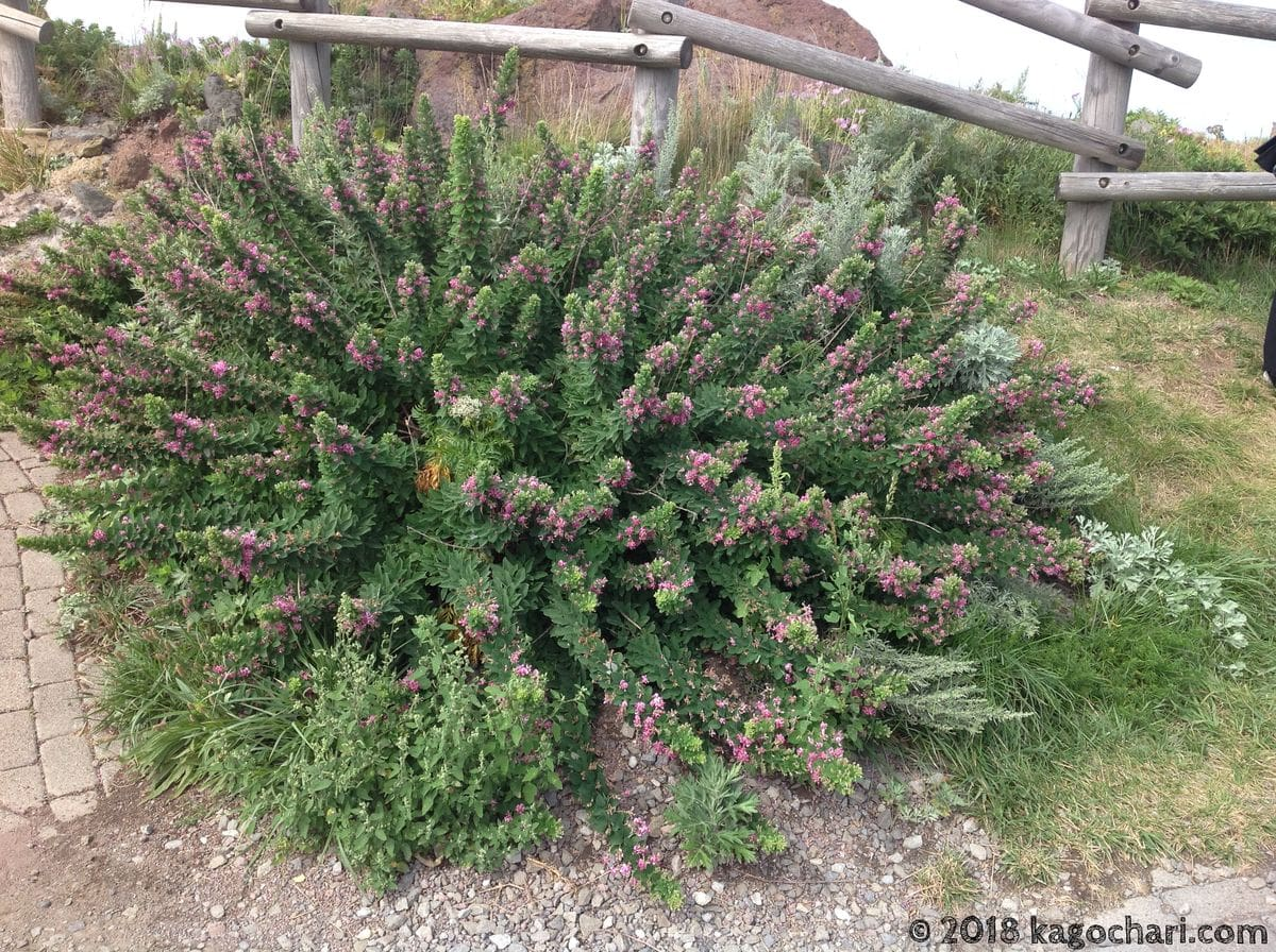 神威岬に生育する植物