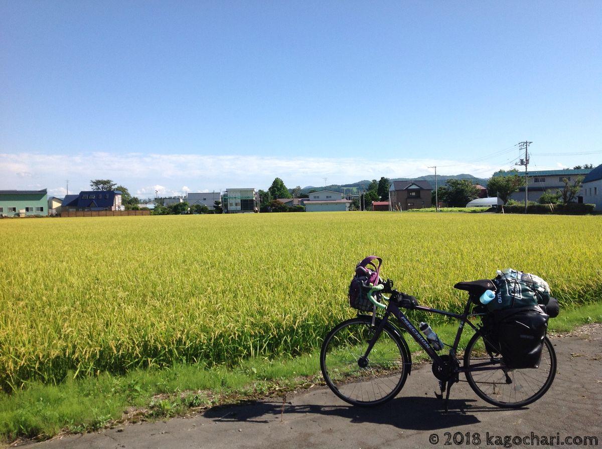稲と自転車