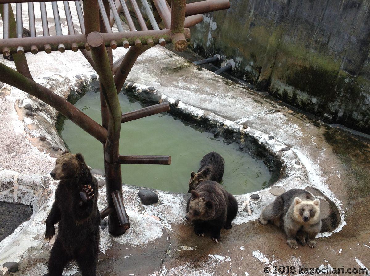 のぼりべつクマ牧場-クマたち